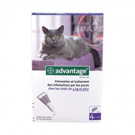 Pipettes Advantage Chat 80 (4kg et plus)