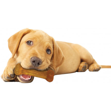 Puppy Bone Nylabone Chicken S